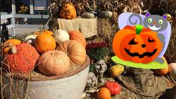 Parker Halloween Event Pumpkin Festival at Tagawa Gardens